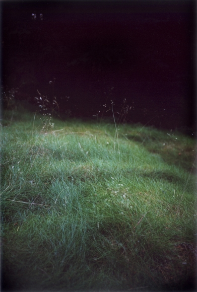 Forest #6, Untitled (Singing Grass), 2004, 10 1/2 x 7 inch chromogenic print